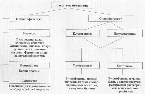 Защитные механизмы макроорганизма