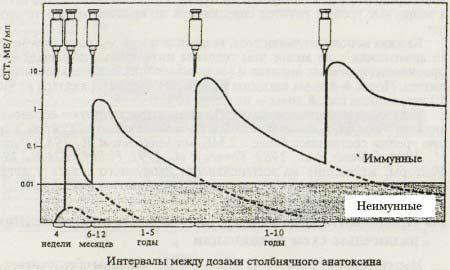 Динамика образования антител