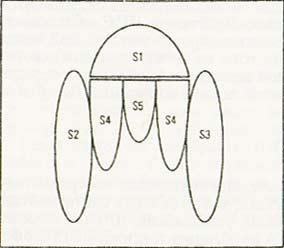Схематическая структура коклюшного токсина