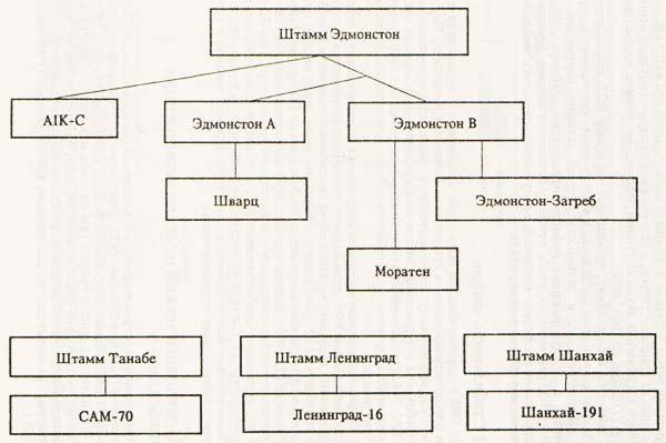 Происхождение некоторых штаммов коревой вакцины